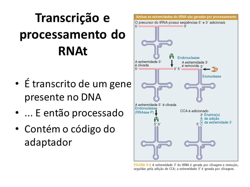 Transcrição e processamento do RNAt