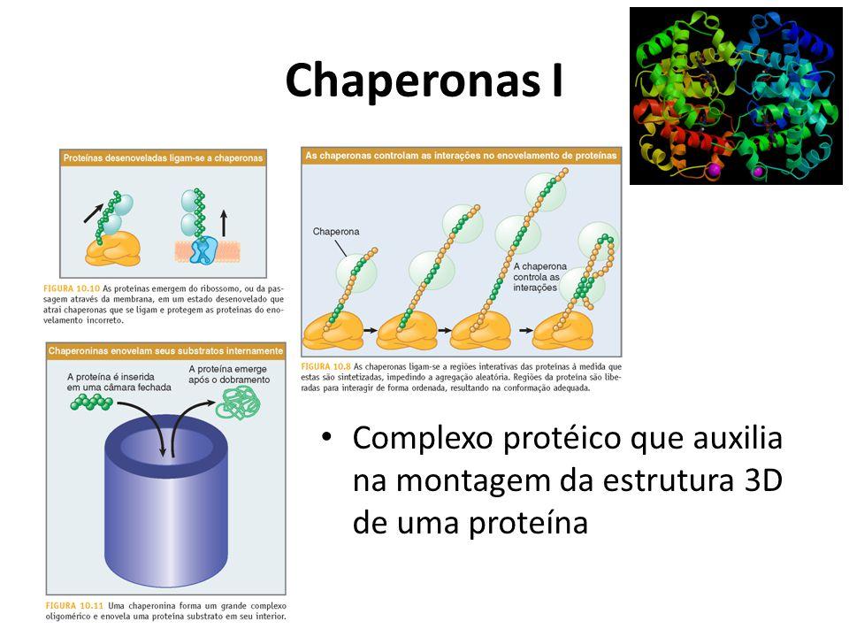 Chaperonas I Complexo protéico que auxilia na montagem da estrutura 3D de uma proteína