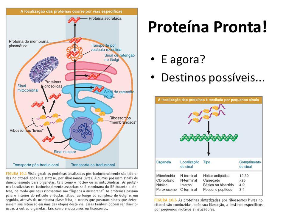 Proteína Pronta! E agora Destinos possíveis...