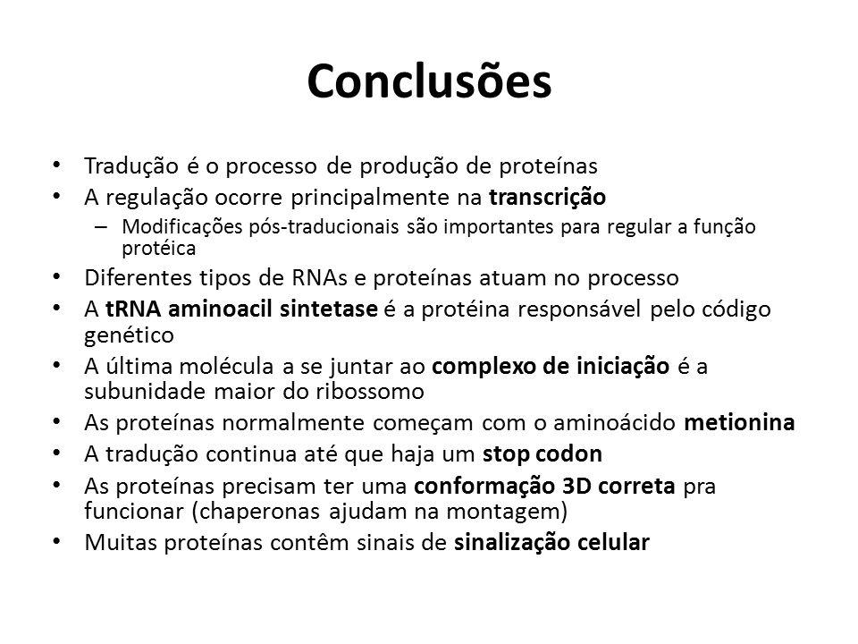 Conclusões Tradução é o processo de produção de proteínas