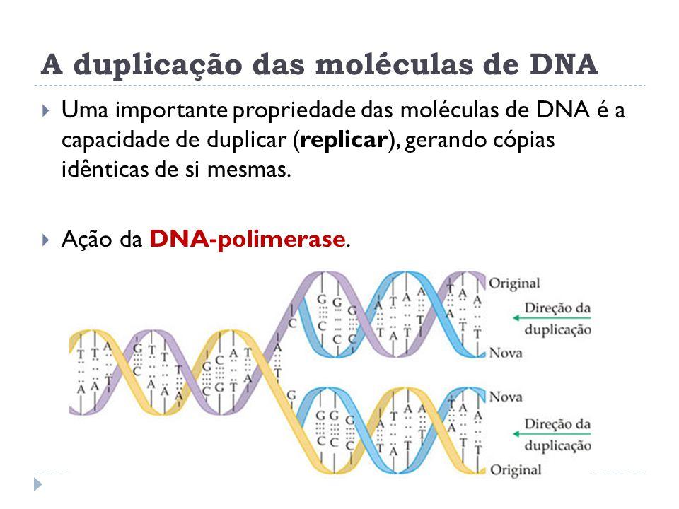 A duplicação das moléculas de DNA