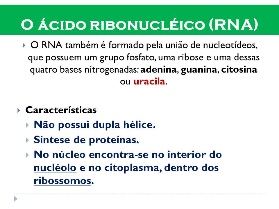 O ácido ribonucléico (RNA)
