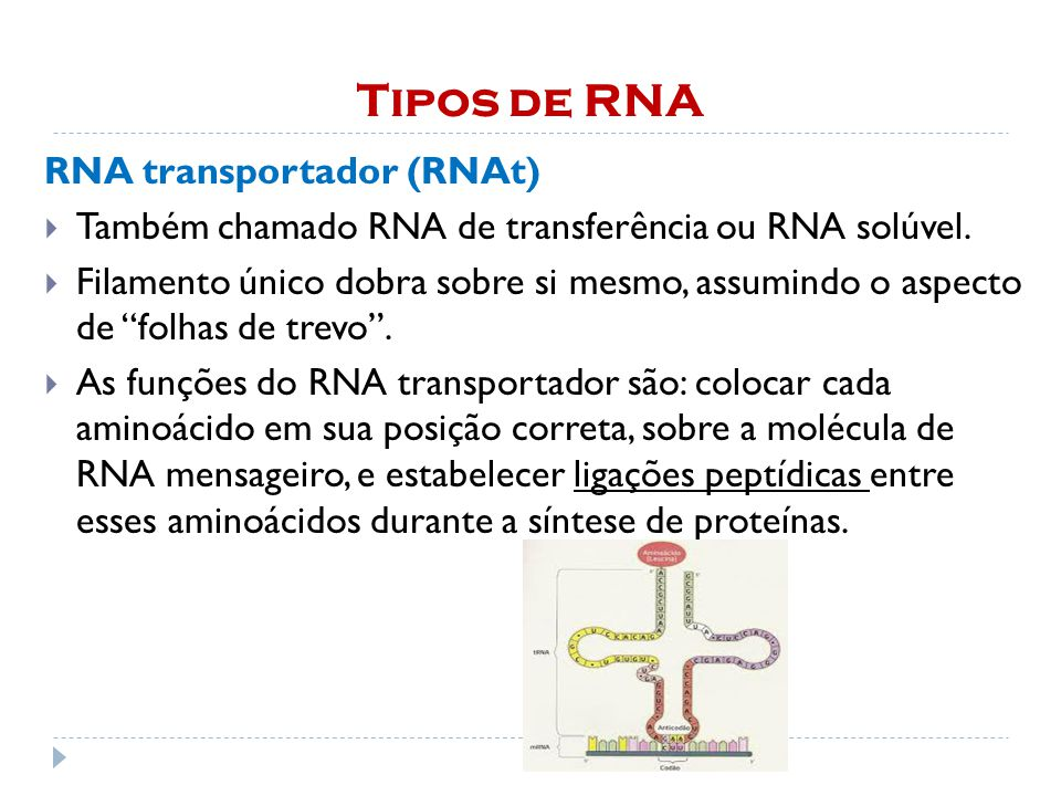 Tipos de RNA RNA transportador (RNAt)