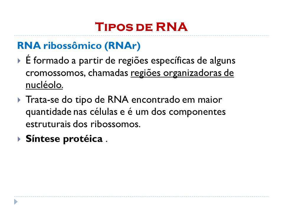 Tipos de RNA RNA ribossômico (RNAr)