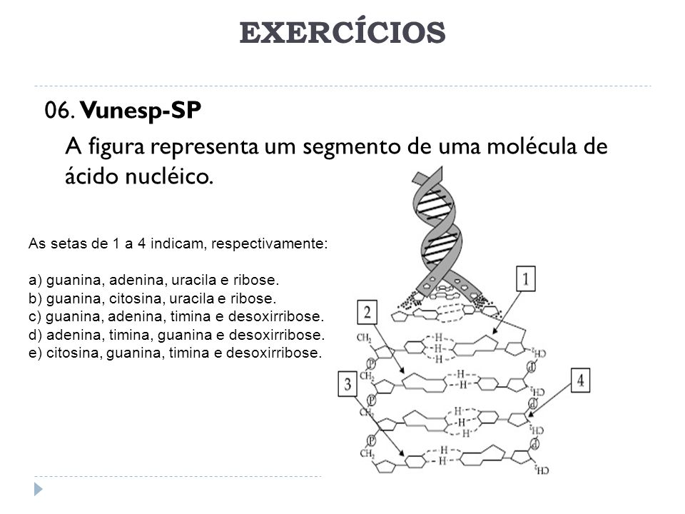EXERCÍCIOS 06. Vunesp-SP A figura representa um segmento de uma molécula de ácido nucléico. As setas de 1 a 4 indicam, respectivamente: