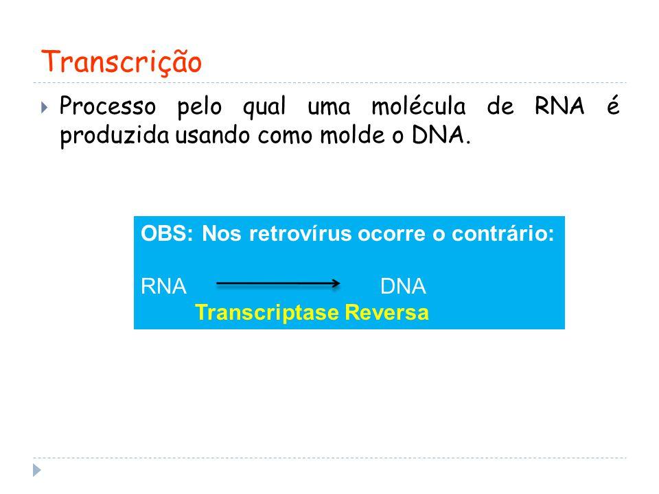 Transcrição Processo pelo qual uma molécula de RNA é produzida usando como molde o DNA. OBS: Nos retrovírus ocorre o contrário: