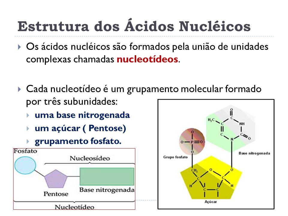 Estrutura dos Ácidos Nucléicos
