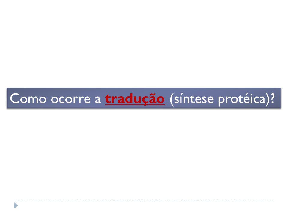 Como ocorre a tradução (síntese protéica)