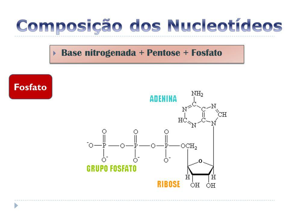 Composição dos Nucleotídeos