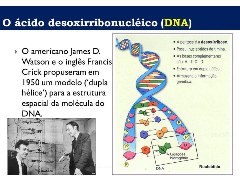 O ácido desoxirribonucléico (DNA)