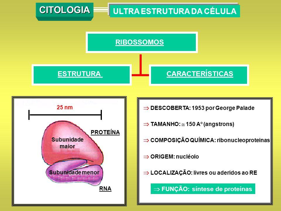 CITOLOGIA ULTRA ESTRUTURA DA CÉLULA RIBOSSOMOS ESTRUTURA