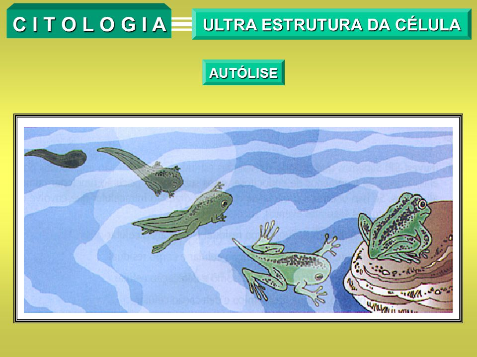 ULTRA ESTRUTURA DA CÉLULA