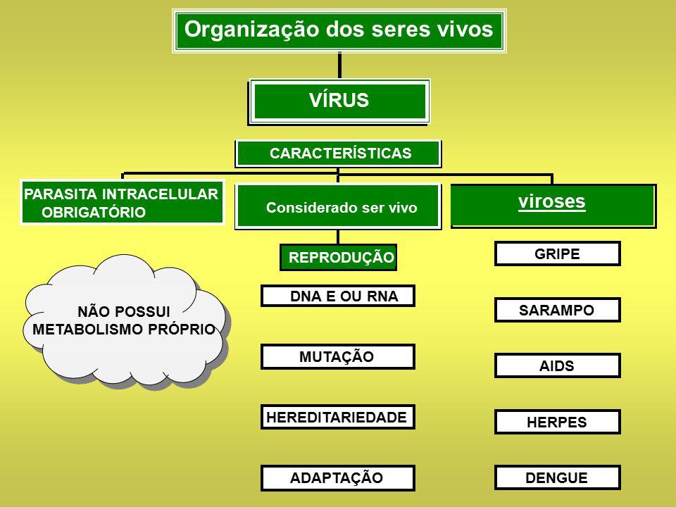 Organização dos seres vivos