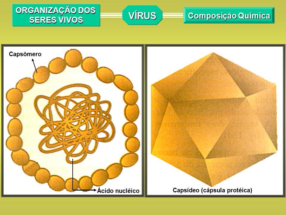VÍRUS ORGANIZAÇÃO DOS SERES VIVOS Composição Química Capsômero
