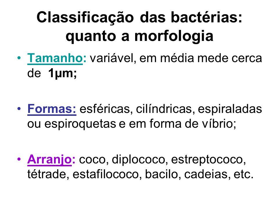 Classificação das bactérias: quanto a morfologia