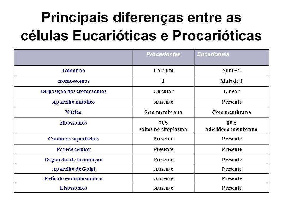 Principais diferenças entre as células Eucarióticas e Procarióticas