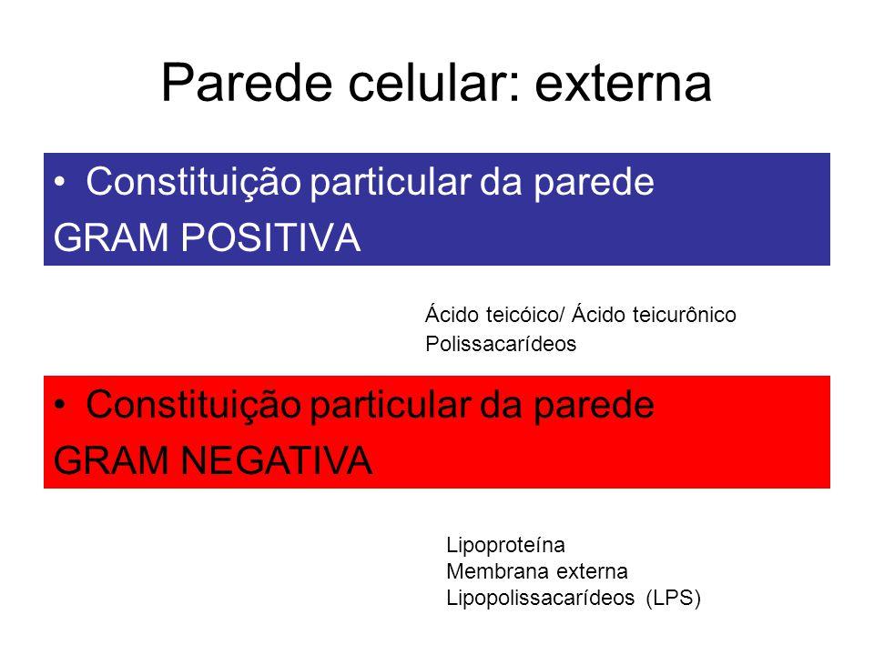 Parede celular: externa
