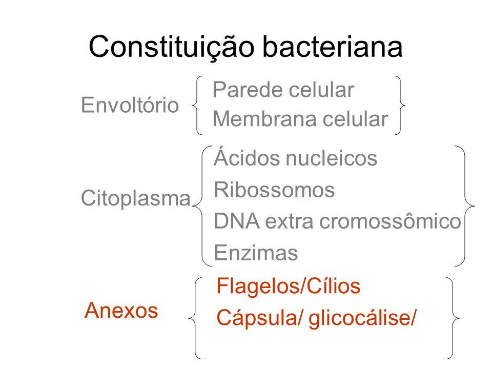 Constituição bacteriana