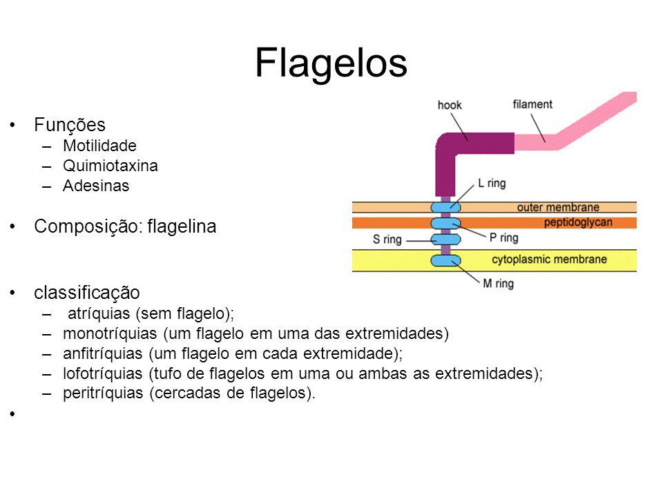 Flagelos Funções Composição: flagelina classificação Motilidade