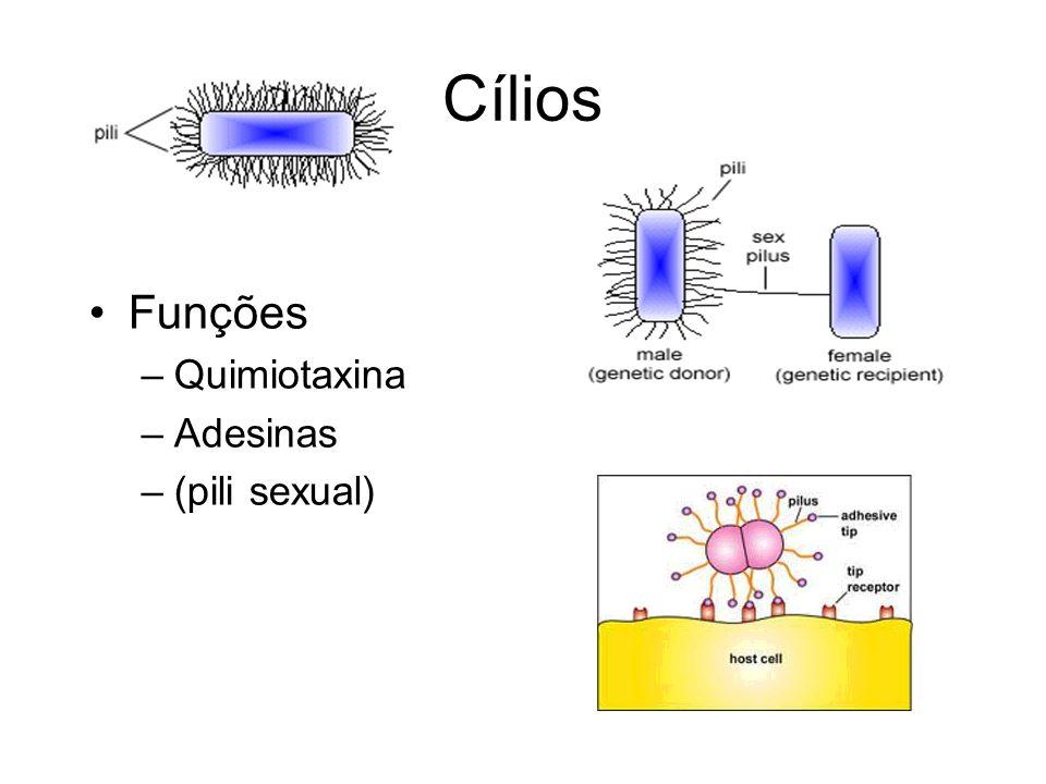 Cílios Funções Quimiotaxina Adesinas (pili sexual)