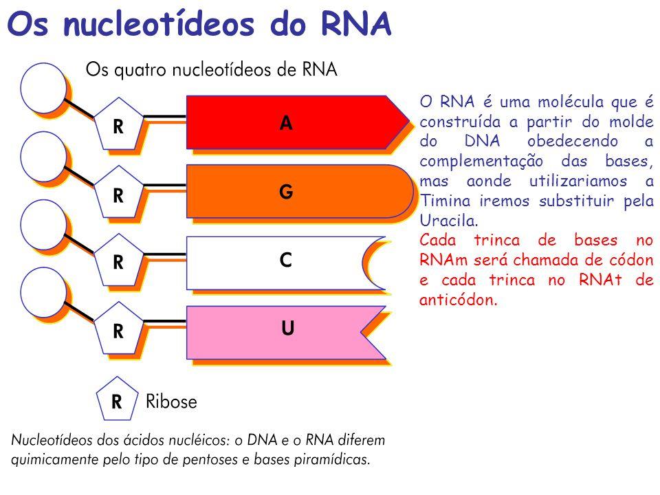 Os nucleotídeos do RNA