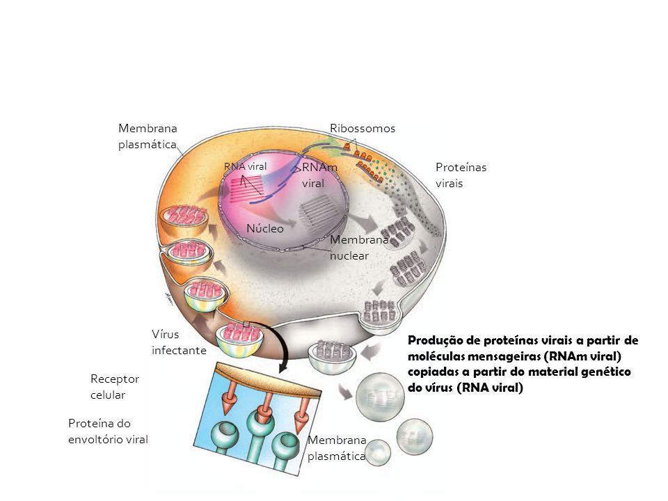 Proteína do envoltório viral Membrana plasmática