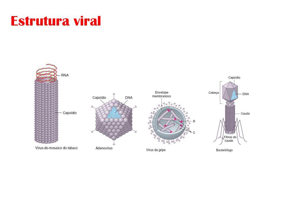 Estrutura viral