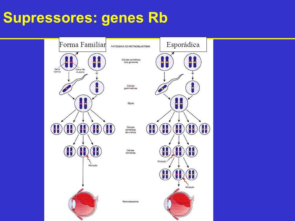 Supressores: genes Rb Forma Familiar Esporádica