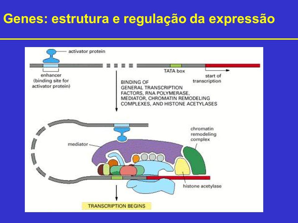 Genes: estrutura e regulação da expressão