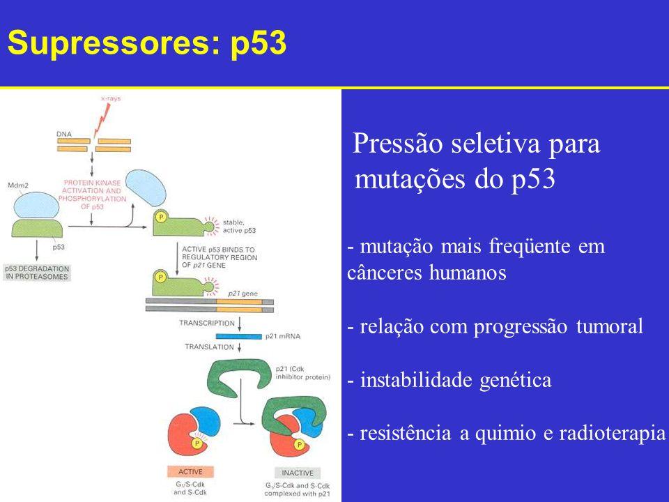 Supressores: p53 mutações do p53 Pressão seletiva para