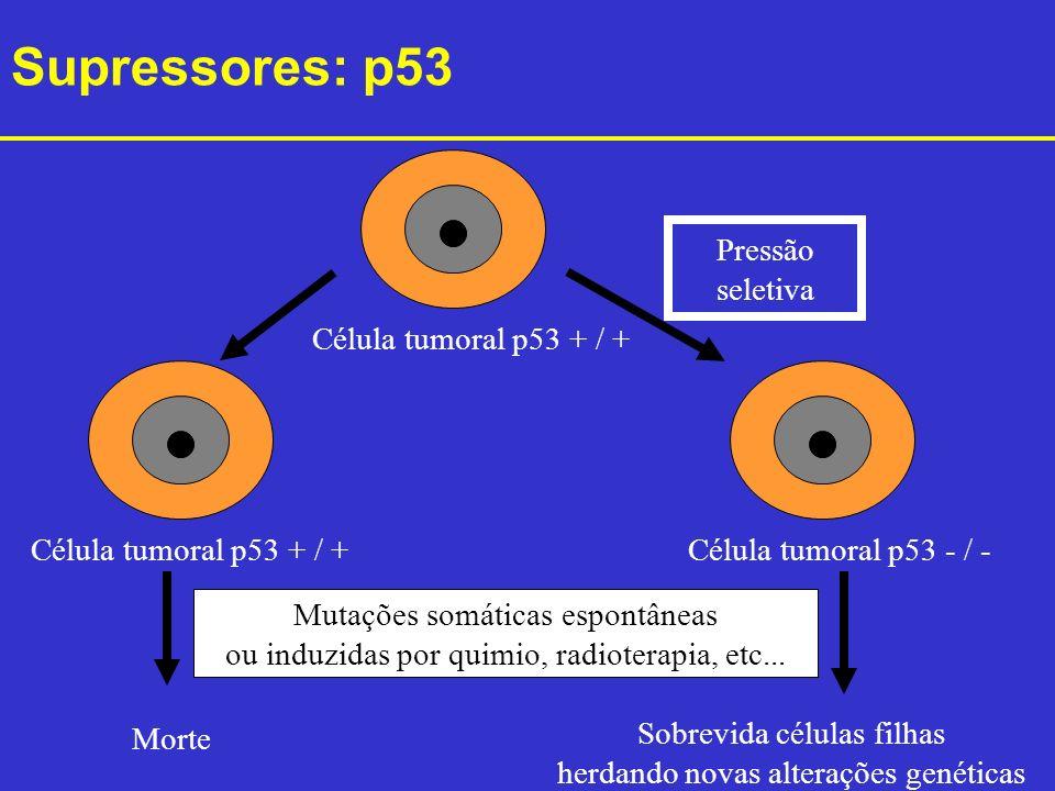 Supressores: p53 Pressão seletiva Célula tumoral p53 + / +