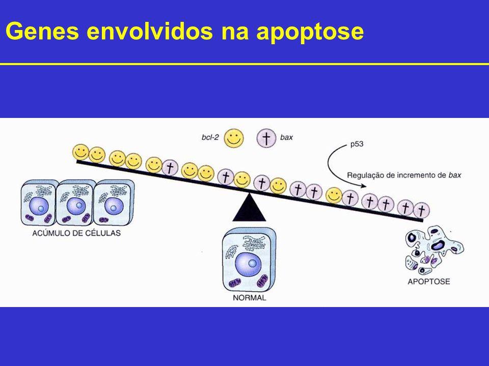 Genes envolvidos na apoptose