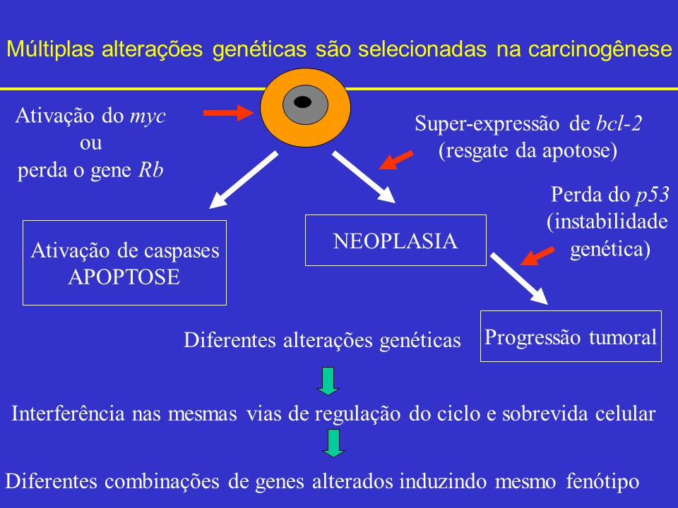 Múltiplas alterações genéticas são selecionadas na carcinogênese