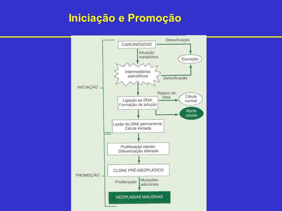 Iniciação e Promoção