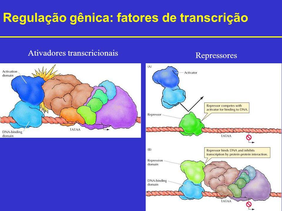 Ativadores transcricionais
