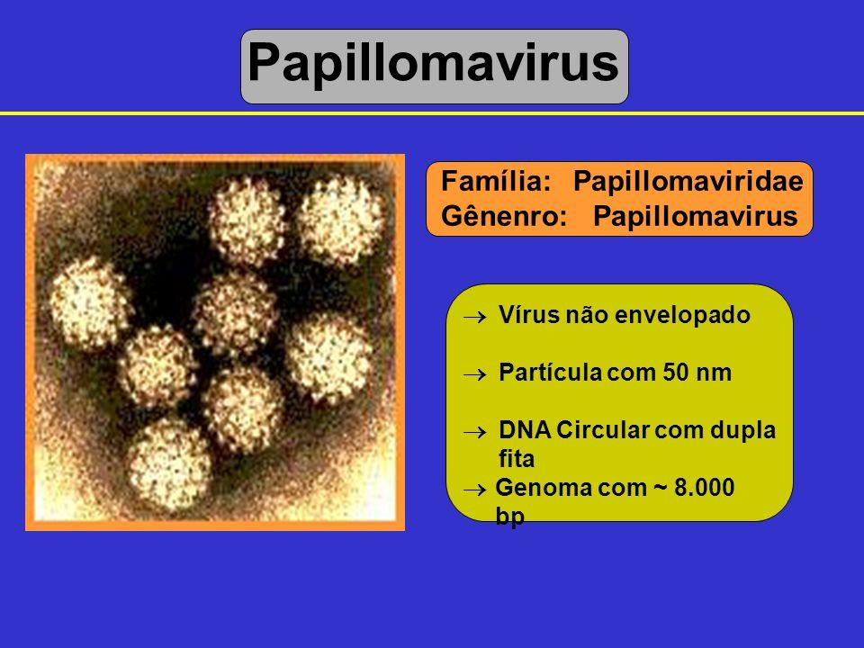 Papillomavirus Família: Papillomaviridae Gênenro: Papillomavirus 