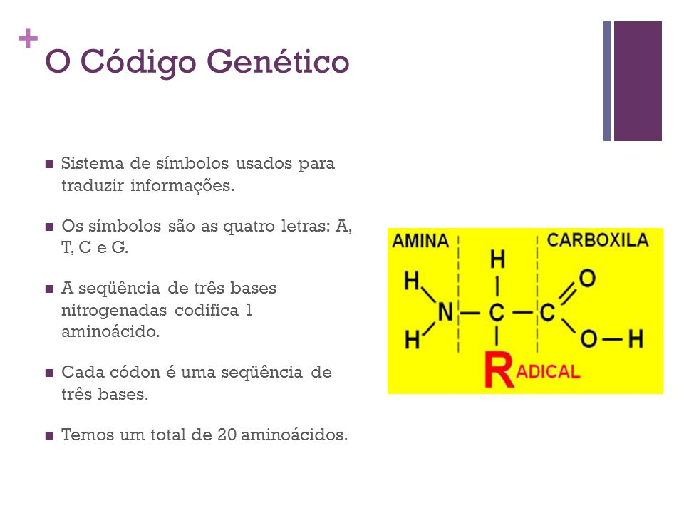 O Código Genético Sistema de símbolos usados para traduzir informações. Os símbolos são as quatro letras: A, T, C e G.