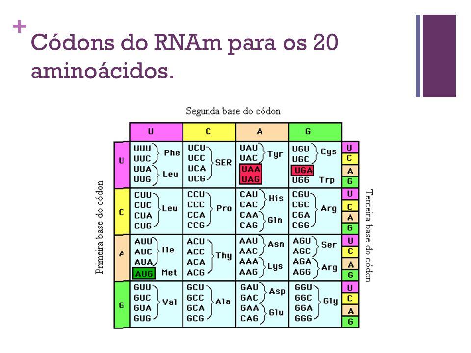 Códons do RNAm para os 20 aminoácidos.