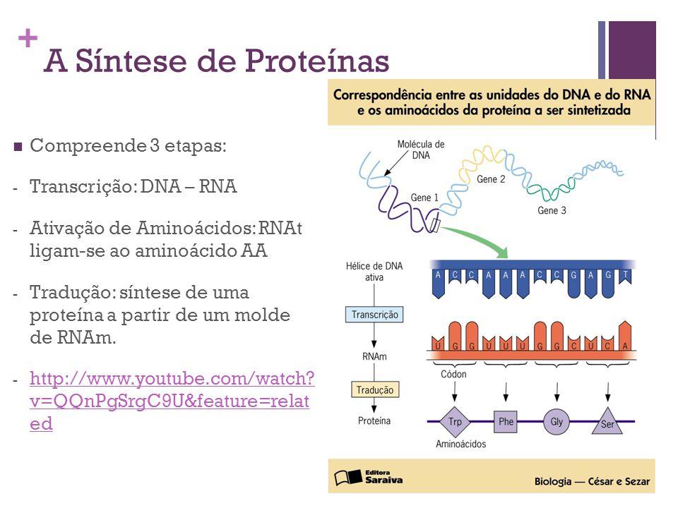 A Síntese de Proteínas Compreende 3 etapas: Transcrição: DNA – RNA