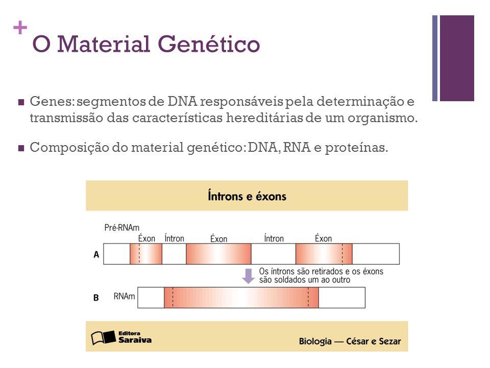 O Material Genético Genes: segmentos de DNA responsáveis pela determinação e transmissão das características hereditárias de um organismo.