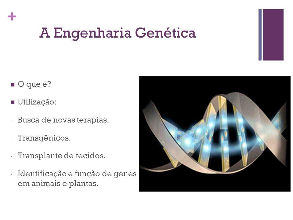 A Engenharia Genética O que é Utilização: Busca de novas terapias.