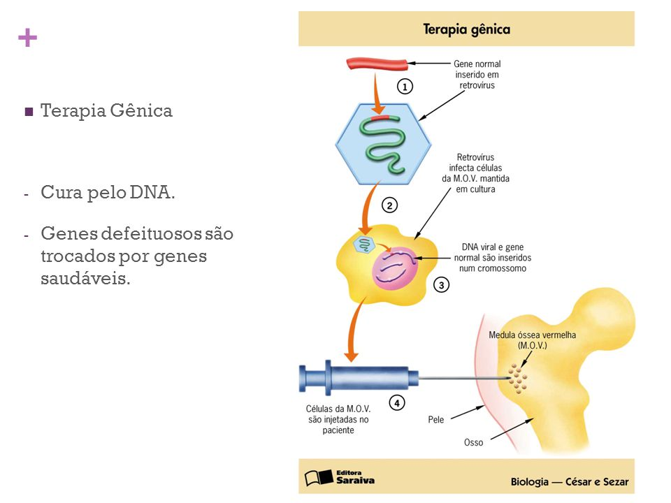 Terapia Gênica Cura pelo DNA. Genes defeituosos são trocados por genes saudáveis.
