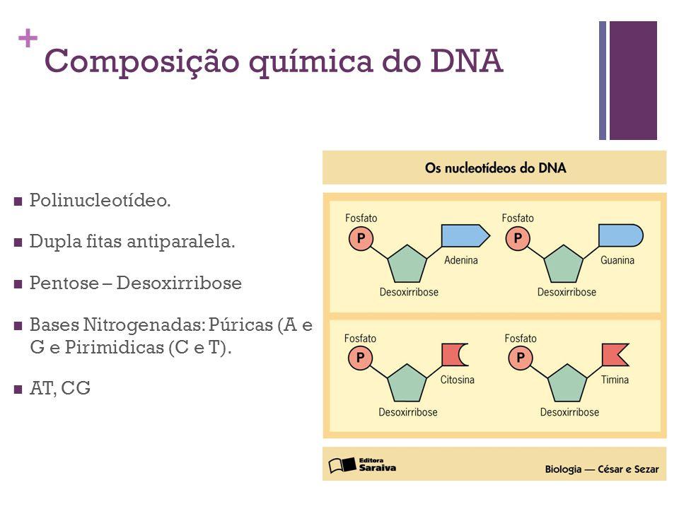 Composição química do DNA
