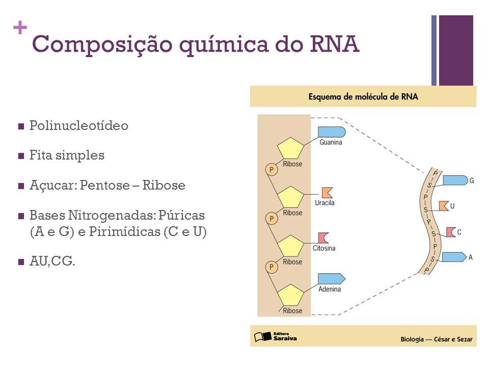 Composição química do RNA