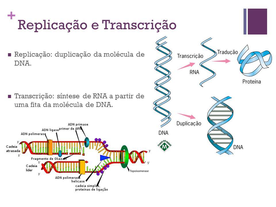 Replicação e Transcrição