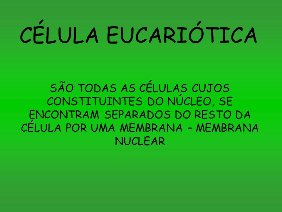 CÉLULA EUCARIÓTICA SÃO TODAS AS CÉLULAS CUJOS CONSTITUINTES DO NÚCLEO, SE ENCONTRAM SEPARADOS DO RESTO DA CÉLULA POR UMA MEMBRANA – MEMBRANA NUCLEAR.