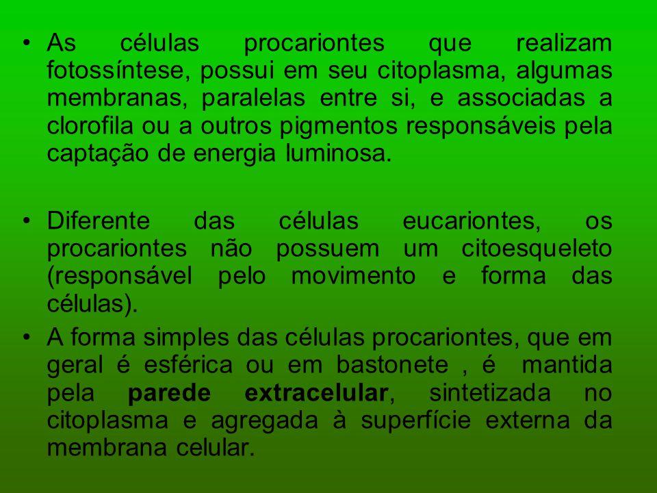 As células procariontes que realizam fotossíntese, possui em seu citoplasma, algumas membranas, paralelas entre si, e associadas a clorofila ou a outros pigmentos responsáveis pela captação de energia luminosa.