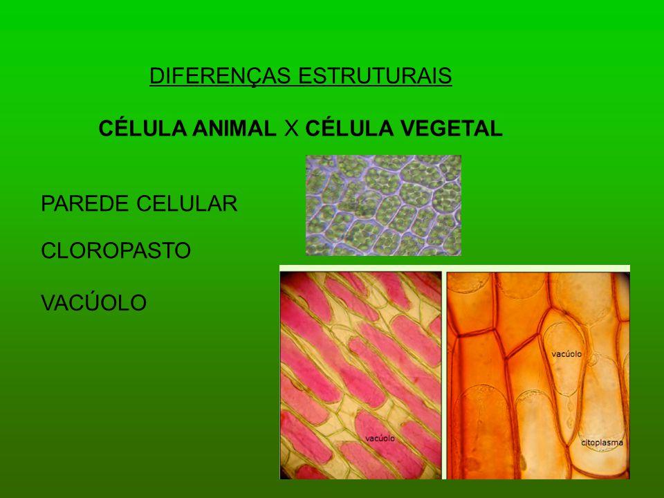 DIFERENÇAS ESTRUTURAIS CÉLULA ANIMAL X CÉLULA VEGETAL