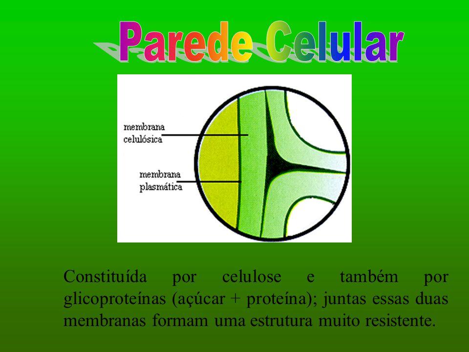 Parede Celular