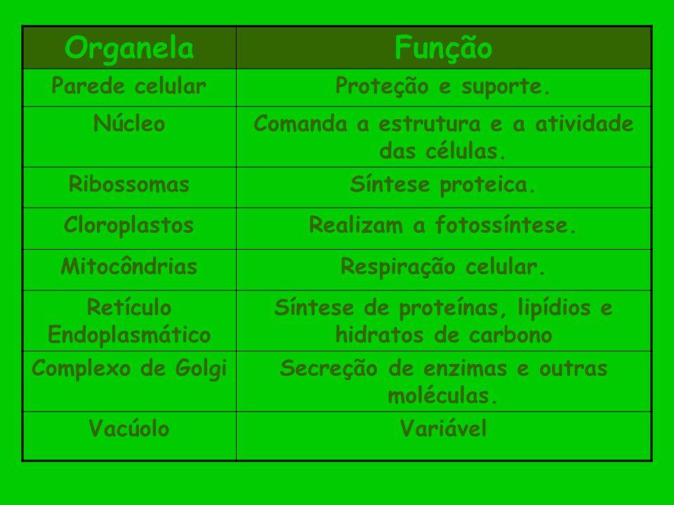 Organela Função Parede celular Proteção e suporte. Núcleo